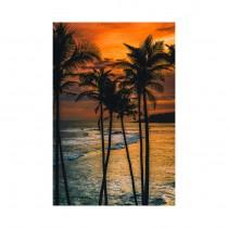 Through the Palm Trees